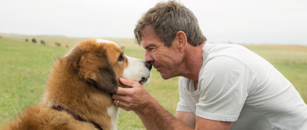 Photo of Universal Pictures presenta 'A dog's purpose'