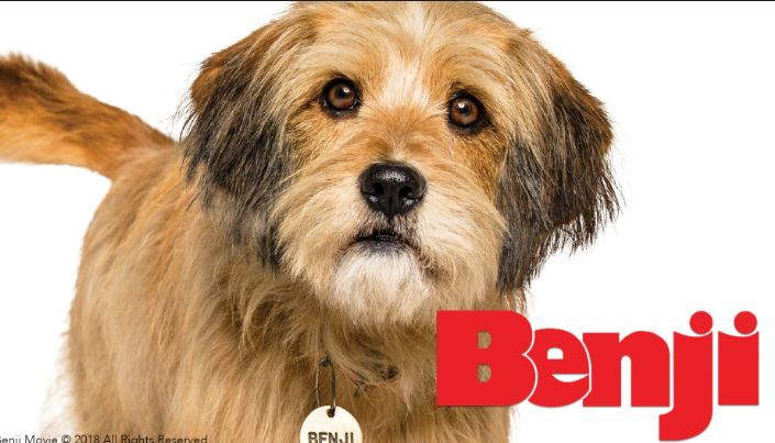 Photo of Netflix lanza tráiler oficial de 'Benji'