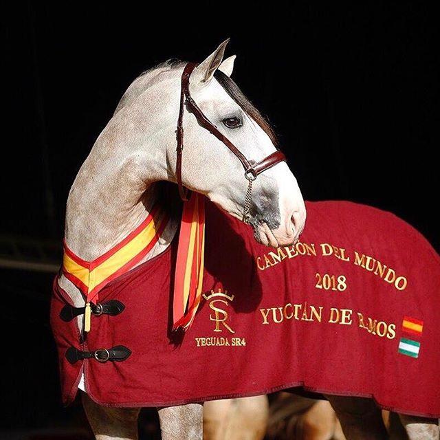 Photo of Uno de los caballos de Sergio Ramos se proclamó 'Campeón del mundo 2018'