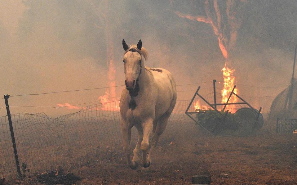 Photo of Continúa la devastación de los incendios en Australia