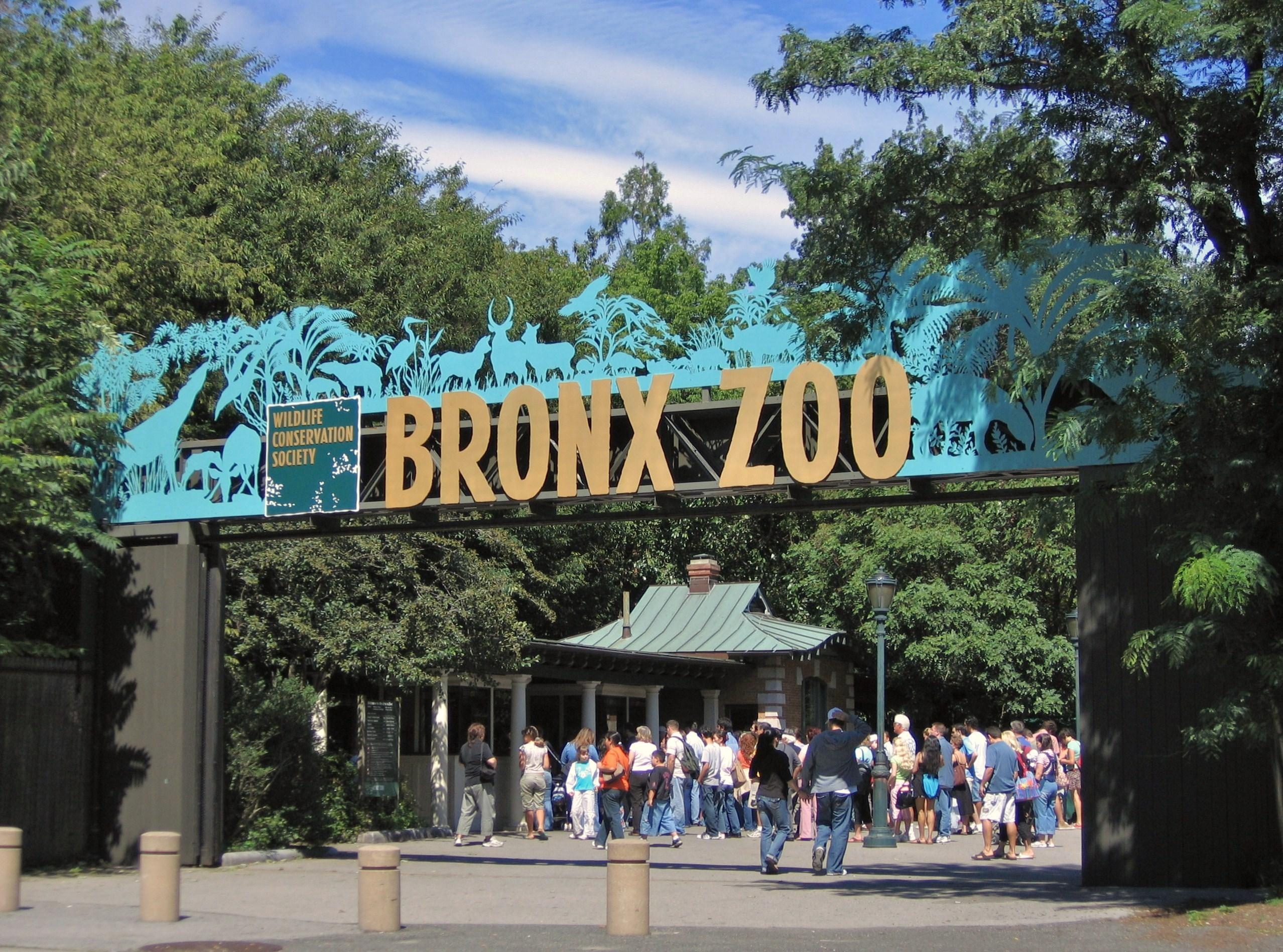 Photo of Un tigre del zoológico del Bronx en Nueva York, dio positivo de coronavirus