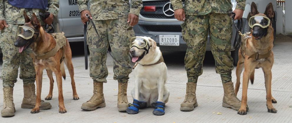 Photo of Conoce los héroes de cuatro patas