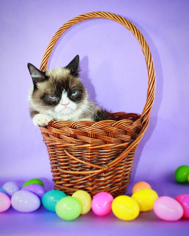 Photo of Muere «Grumpy Cat» la gata más famosa de Internet que conquisto con su cara malhumorada