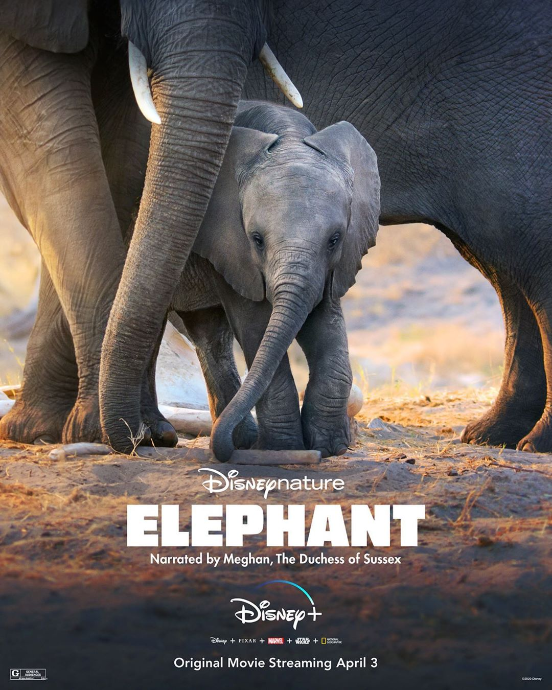 "Photo of Meghan Markle narrará el nuevo documenta de Disney+ ""Elephant"""